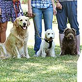 Ateliers d'éducation canine en groupe